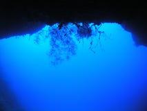Silouette de corail mou Image libre de droits