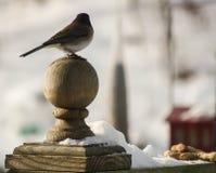 Silouette del passero Immagini Stock Libere da Diritti