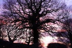 Silouette dell'albero della Suffolk immagini stock libere da diritti