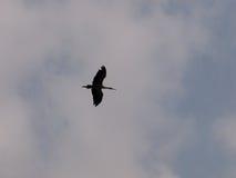 Silouette dell'uccello Fotografia Stock