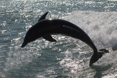 Silouette of a dolphin Stock Photography
