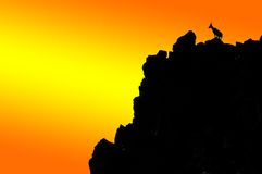 Silouette of Mountain Ibex. (capra Ibex) on mountain top against firey sky Stock Photography