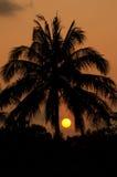 Silouettes al tramonto Fotografia Stock