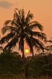 Silouettes al tramonto Fotografia Stock Libera da Diritti