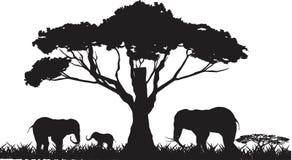 Silouettes degli elefanti isolati su fondo bianco Fotografia Stock