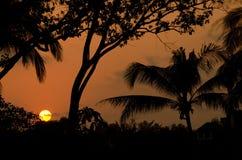Silouettes no por do sol Imagens de Stock
