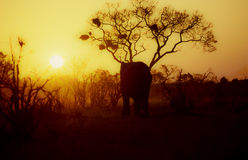 Silouhette do elefante Foto de Stock Royalty Free