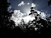 Silouhette. Nature silouhette flower Royalty Free Stock Images