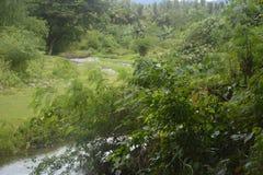 Siltation is duidelijk van deze rivier Stock Fotografie