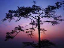 siluate δέντρο Στοκ φωτογραφίες με δικαίωμα ελεύθερης χρήσης