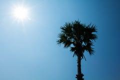 Siluate träd med solstjärnan Royaltyfri Bild
