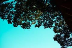 Siluate träd och ljusa himlar arkivbild