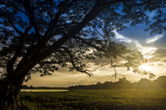 Silhouette tree. Sunset light fantastic light Stock Photo