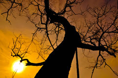 Siluet-Baum stockbild