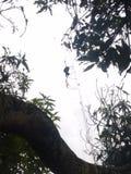 Siluet de la araña Foto de archivo