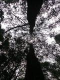Siluet dell'albero Fotografia Stock Libera da Diritti