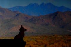 Silueta 1 del coyote Imagen de archivo libre de regalías