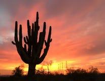 Silueta antigua del árbol del cactus del Saguaro Imagen de archivo