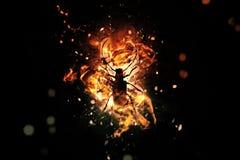 silueta artística del insecto fotografía de archivo libre de regalías