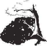 Silueta bajo árbol Imagen de archivo