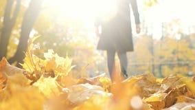 Silueta borrosa de una mujer que deja la luz en el otoño en hojas caidas, abstracción almacen de metraje de vídeo
