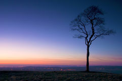 Silueta crepuscular del árbol Foto de archivo
