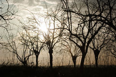 Silueta de árboles descubiertos en la salida del sol Imagenes de archivo