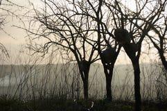 Silueta de árboles descubiertos en la salida del sol Foto de archivo libre de regalías