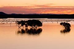 Silueta de árboles en agua en la puesta del sol en boca de río del agua salada fotos de archivo