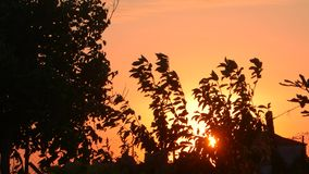 Silueta de árboles en el cielo anaranjado de la puesta del sol almacen de video