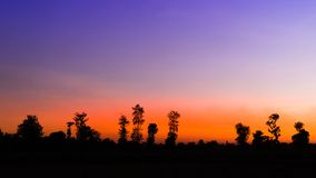 Silueta de árboles en el cielo azul en la escena determinada del sol Fotografía de archivo
