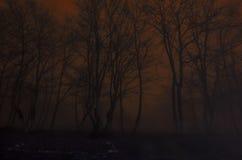 Silueta de árboles en la noche, concepto asustadizo del horror del bosque de niebla fantasmagórico Imagen de archivo