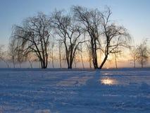 Silueta de árboles en la puesta del sol foto de archivo libre de regalías