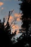 Silueta de árboles en la puesta del sol Imagen de archivo libre de regalías
