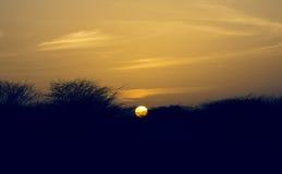 Silueta de árboles secos con el sol Fotos de archivo libres de regalías
