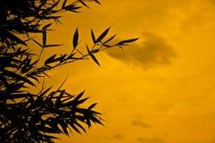 Silueta de bambú Imagen de archivo libre de regalías