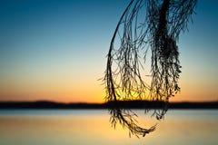 Silueta de cañas en el lago Imagen de archivo libre de regalías