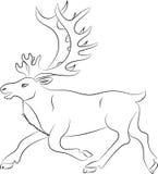 Silueta de ciervos Fotografía de archivo libre de regalías