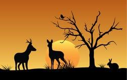 Silueta de ciervos, de liebres y del pájaro en la puesta del sol Foto de archivo