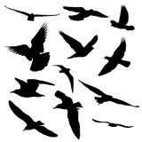 Silueta de doce pájaros Foto de archivo