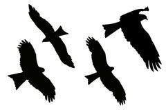 Silueta de Eagles - cometa negra stock de ilustración