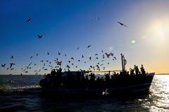 Silueta de gaviotas y del transbordador de pasajero Foto de archivo