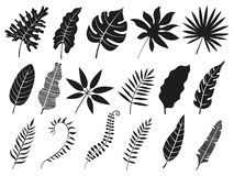 Silueta de hoja de palma La fronda de Monstera, planta sale de siluetas y del sistema aislado las frondas tropicales de los icono stock de ilustración