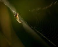 Silueta de la araña en un web imagen de archivo libre de regalías