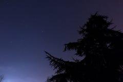 Silueta de la estrella y del pino Fotos de archivo libres de regalías