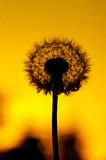 Silueta de la flor Fotos de archivo libres de regalías