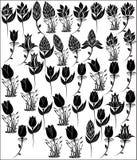 Silueta de la flor Fotografía de archivo