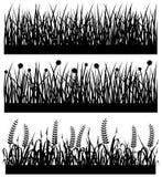 Silueta de la flor de la planta de la hierba Fotografía de archivo libre de regalías