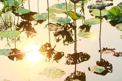 Silueta de la flor de loto Imagen de archivo
