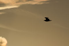 Silueta de la gaviota durante salida del sol brillante en Miami Imágenes de archivo libres de regalías